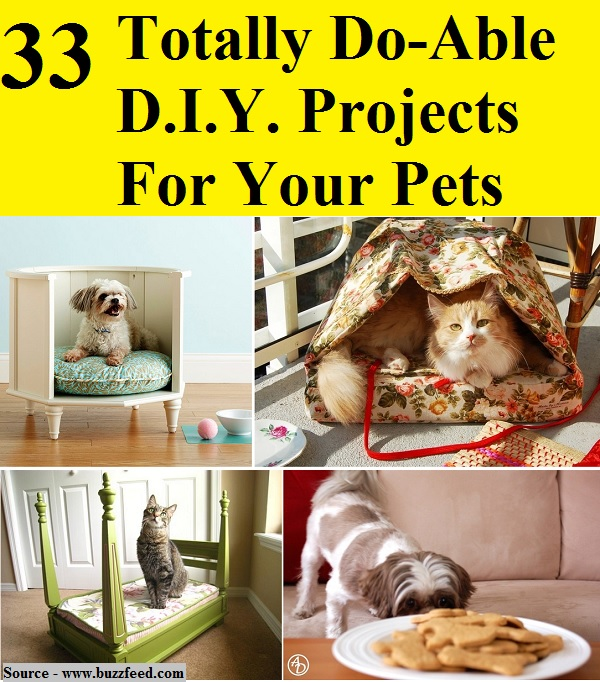 33 Totally Do-Able DIY Projects For Your Pets