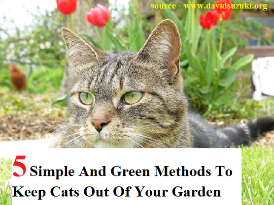 5 Simple And Green Methods To Keep Cats Out Of Your Garden