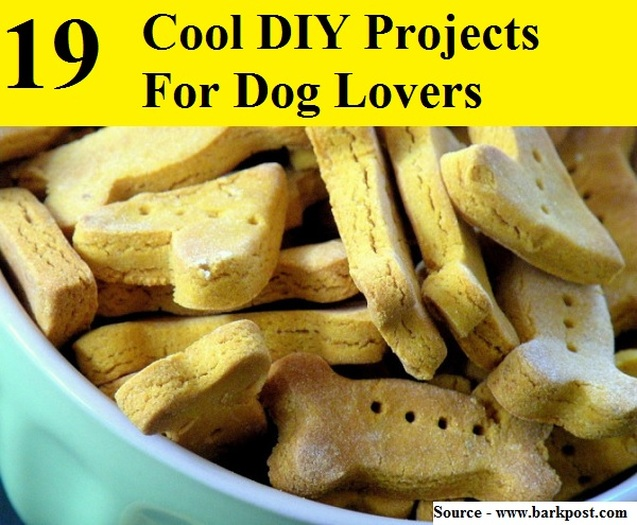 19 Cool DIY Projects For Dog Lovers