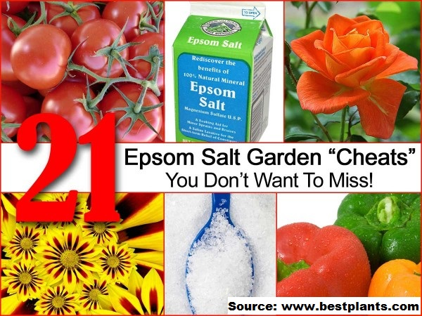"21 Epsom Salt Garden ""Cheats"" You Do Not Want To Miss"
