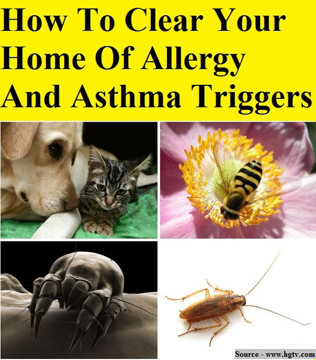 How To Clear Your Home Of Allergy And Asthma Triggers